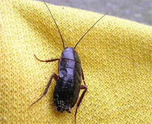 BBC denuncia i reality che fanno strage di insetti