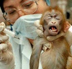 Vivisezione animale: pro, contro e metodiche alternative