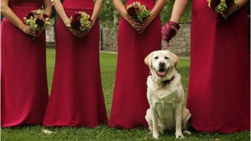 Matrimonio Uomo Cane : Uomo australiano sposa il suo cane diredonna