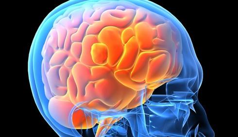 Cervello e memoria, immagini