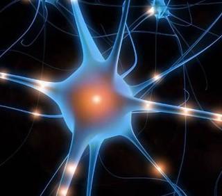 Troppi ricordi fanno male a cervello e memoria