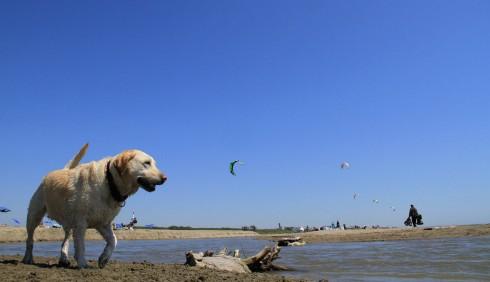 Al mare con gli animali domestici, le foto