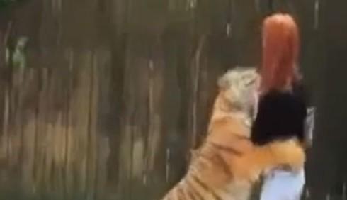 Michela Brambilla e la tigre: insorgono i Verdi