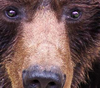 I NAS bloccano la grigliata d'orso della Lega