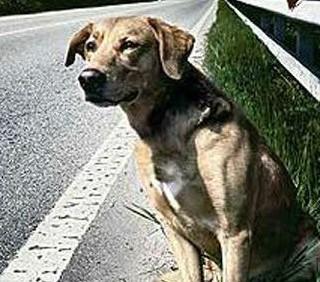 La Lega propone la caccia a cani e gatti