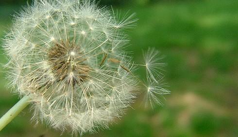 Allergie in aumento, tra pochi anni ne soffrirà uno su due