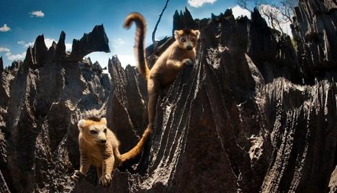 Madagascar, in viaggio con BBC Knowledge