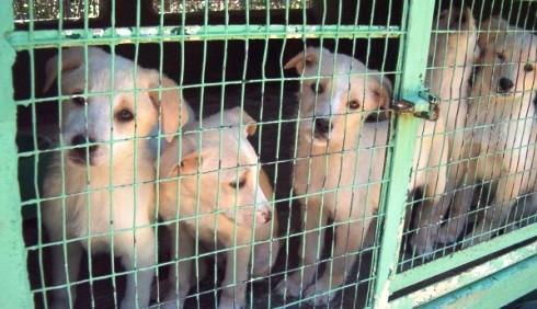 Natale 2011: regalare un cucciolo? Pro e contro