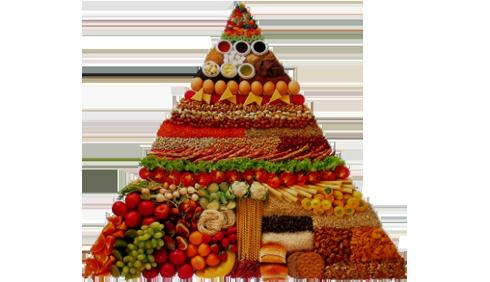 Dieta vegetariana: per tutti dal 2050