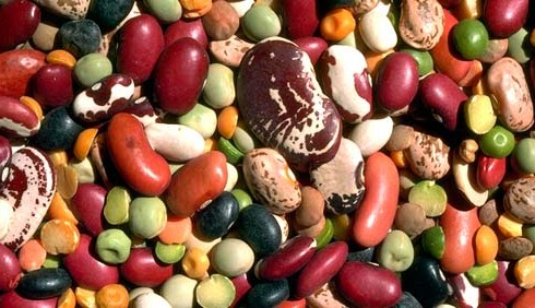 Dieta vegetariana o vegana per smaltire i grassi