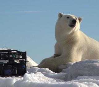Orsi polari e altre storie di amicizia tra animali
