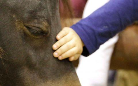 Fiera Cavalli 2014: il villaggio del bambino