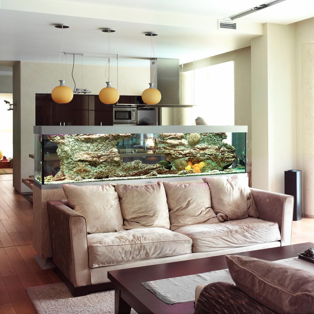 Allestire un acquario come fare diredonna - Acquario da casa ...