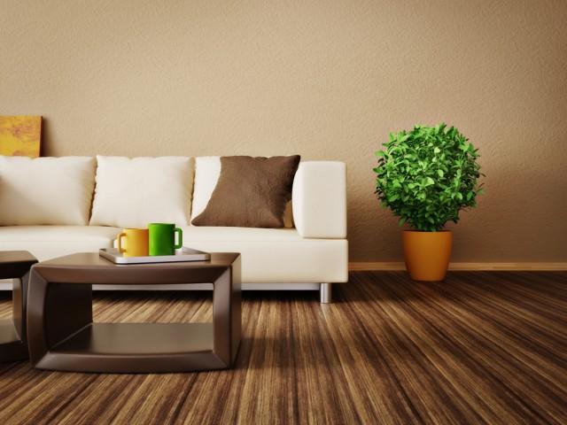 Le 5 migliori piante da appartamento diredonna for Piante appartamento design