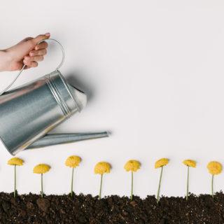 Accessori da giardinaggio: gli indispensabili