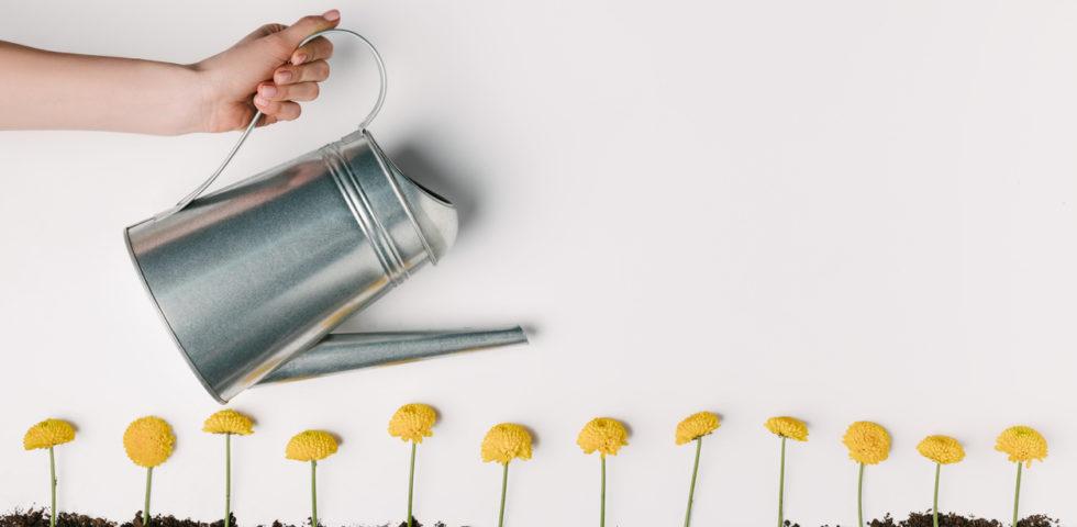 Giardinaggio fai da te: strumenti e attrezzature indispensabili
