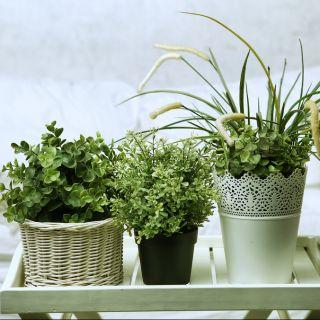 Piante da appartamento: 5 consigli