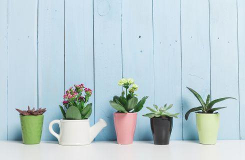 Piante da appartamento: 7 errori da non commettere