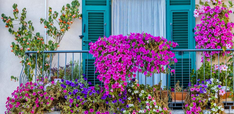 Piante da balcone: quali scegliere e come curarle