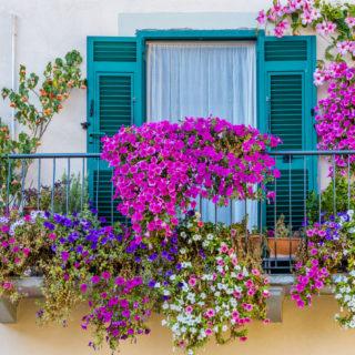 Balcone fiorito: le piante più belle