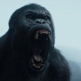 Una scena live ation del film The Legend of Tarzan