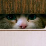 """Una scena di """"Una vita da gatto"""" (Takashi Seida©)"""