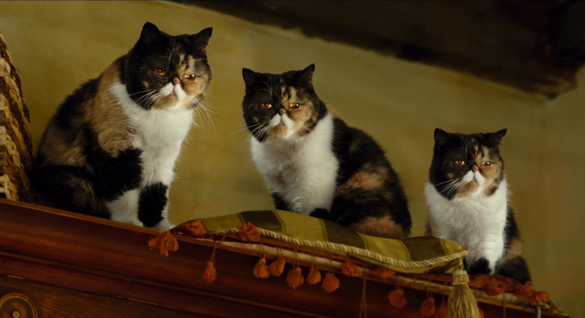 Una vita da gatto con Kevin Spacey e  Jennifer Garner, foto