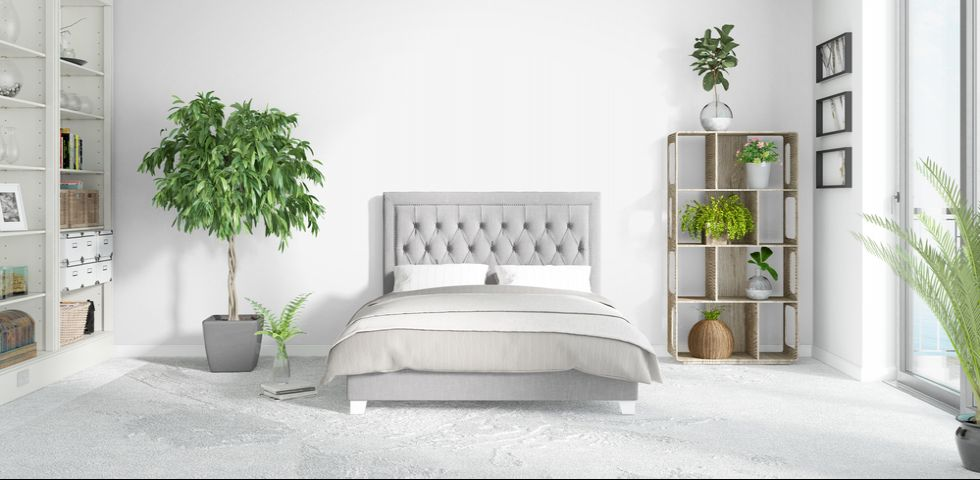 Piante in camera da letto: le varietà da scegliere | DireDonna