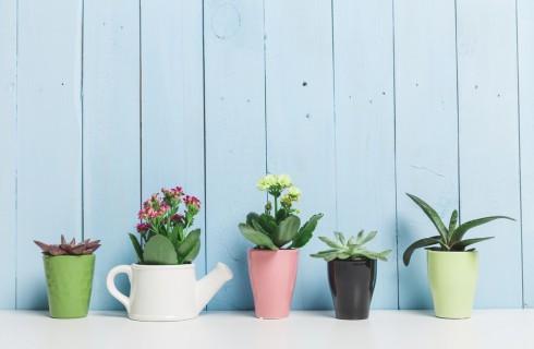 Come e quanto innaffiare le piante grasse