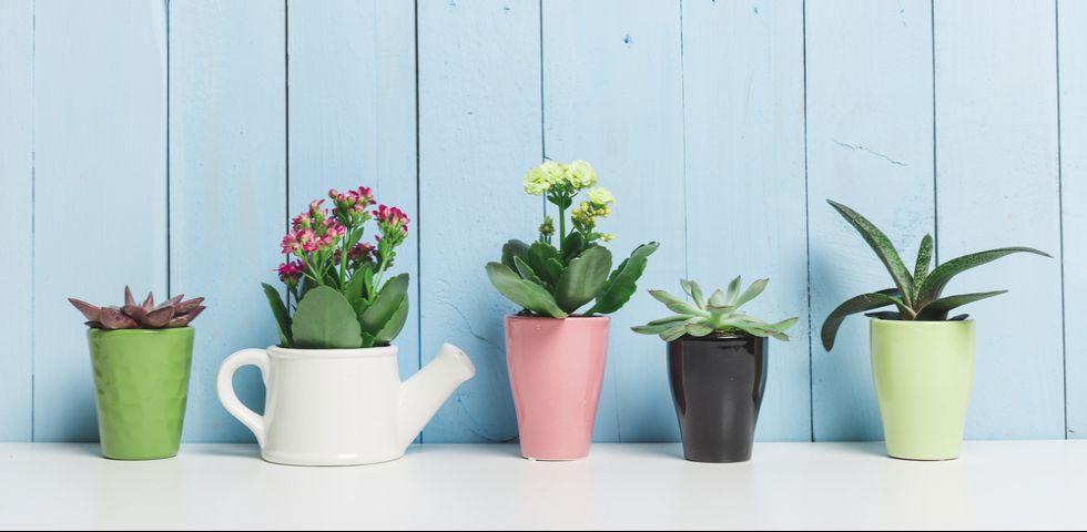 Come e quanto innaffiare le piante grasse   DireDonna