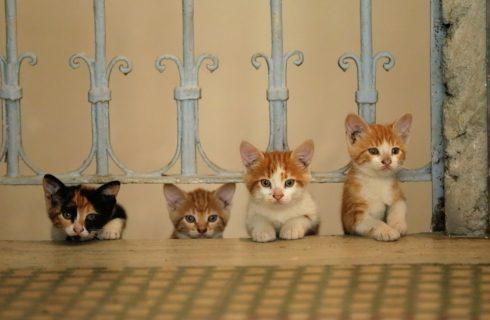 Kedi. La città dei gatti: trama e recensione del film documentario su Istanbul