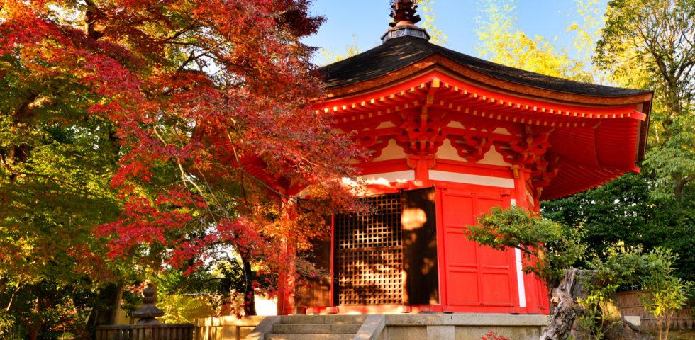 Foliage: 10 luoghi da visitare per ammirare i colori autunnali