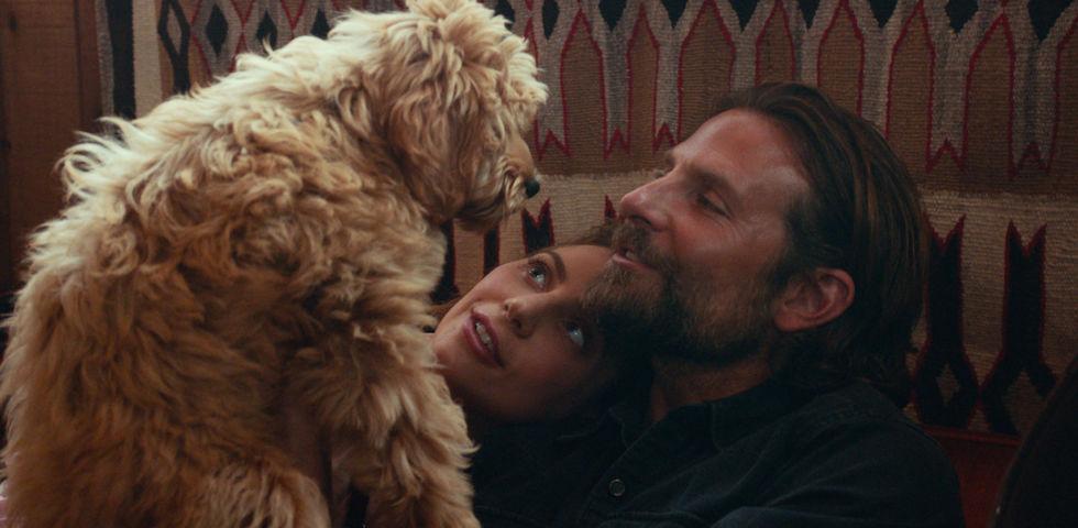 Film d'amore per San Valentino: titoli romantici più belli