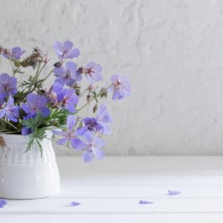I fiori e le piante da regalare per la Festa dei Nonni