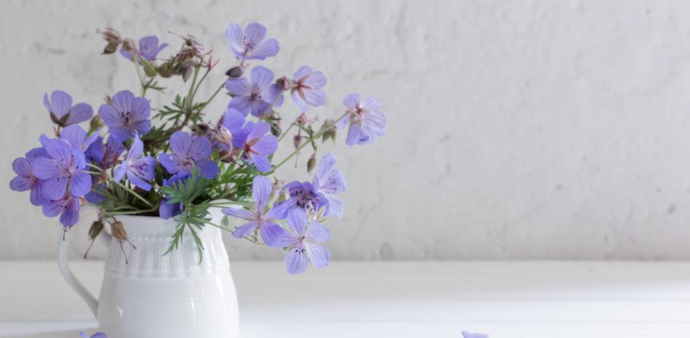 Festa dei Nonni 2019, i fiori e le piante da regalare più belle
