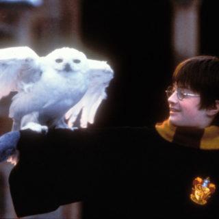 Harry Potter compie 23 anni