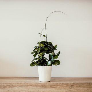 I vasi più belli per le piante da interno