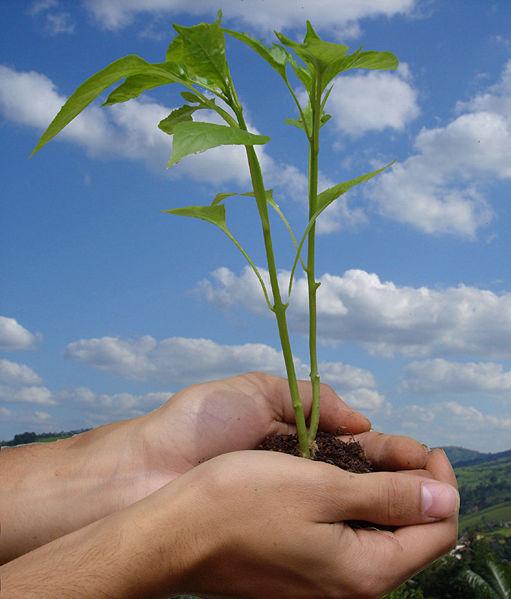 Salvare l'ambiente 2